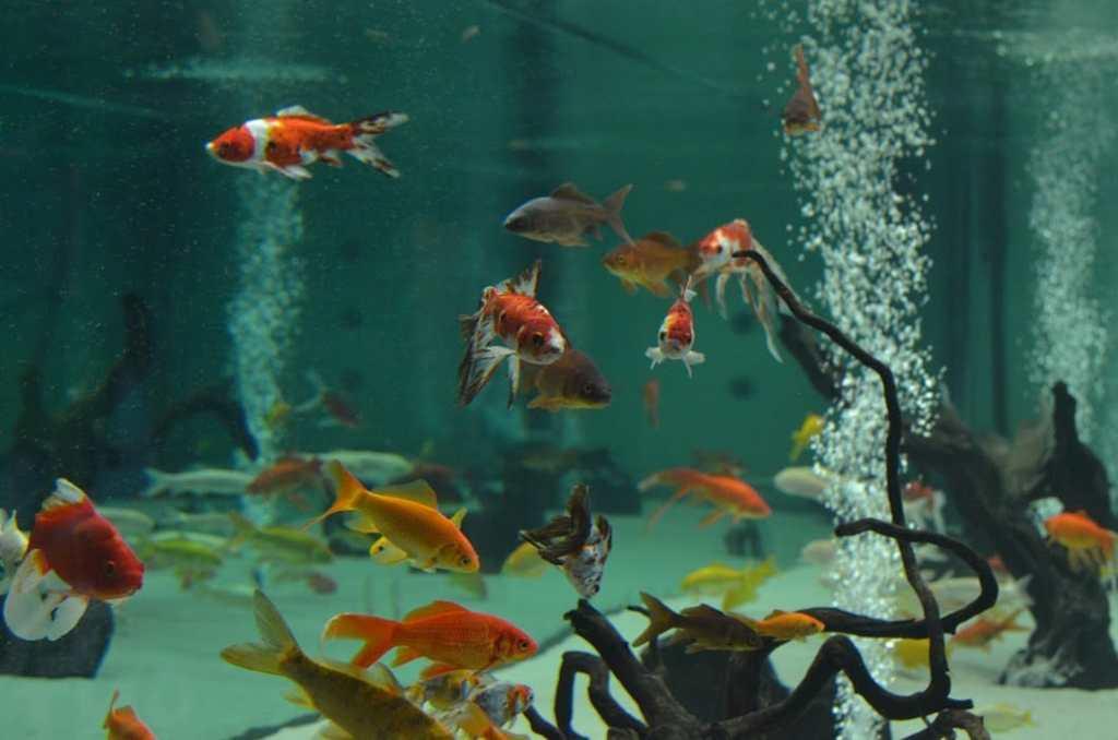 museedelascience-donostia-eureka-poissons