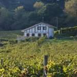 le-txakoli-de-zarautz-vin-blanc-pays-basque-pais-vasco-vignes-foret