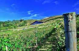 bodega-katxina-vignes-pays-basque