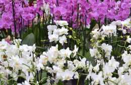 jardinerie-endanea-au-pays-basque