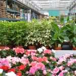 jardinerie-endanea-espace-fleuri-fontarrabie-pays-basque-plantes