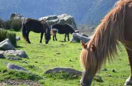 le-mont-adarra-randonnee-pays-basque-balade-chevaux