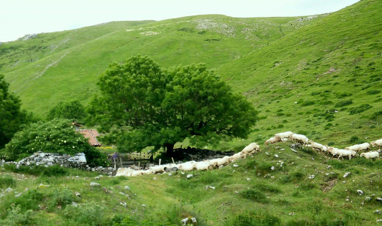 Tolosa-montagnes-moutons-pays-basque