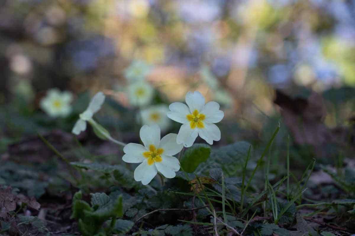 chemins-des-lacs-biarritz-pays-basque-fleurs
