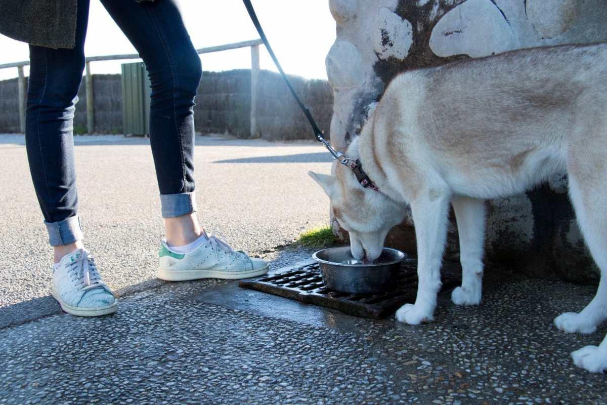 se-balader-avec-son-chien-du-pays-basque-point-d-eau