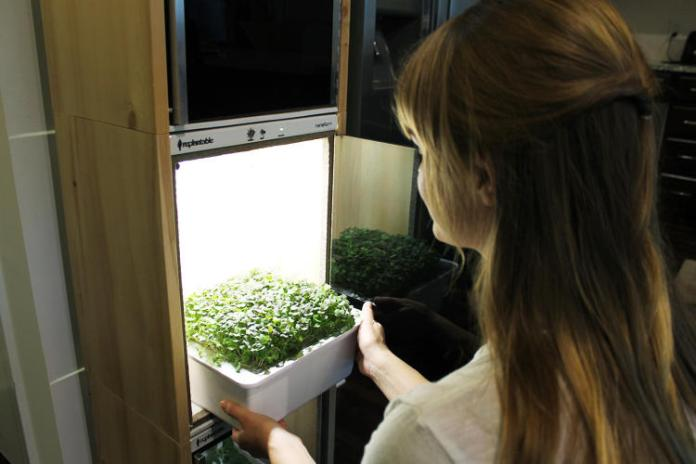 -nanofarm-automatically-grows-salads-in-your