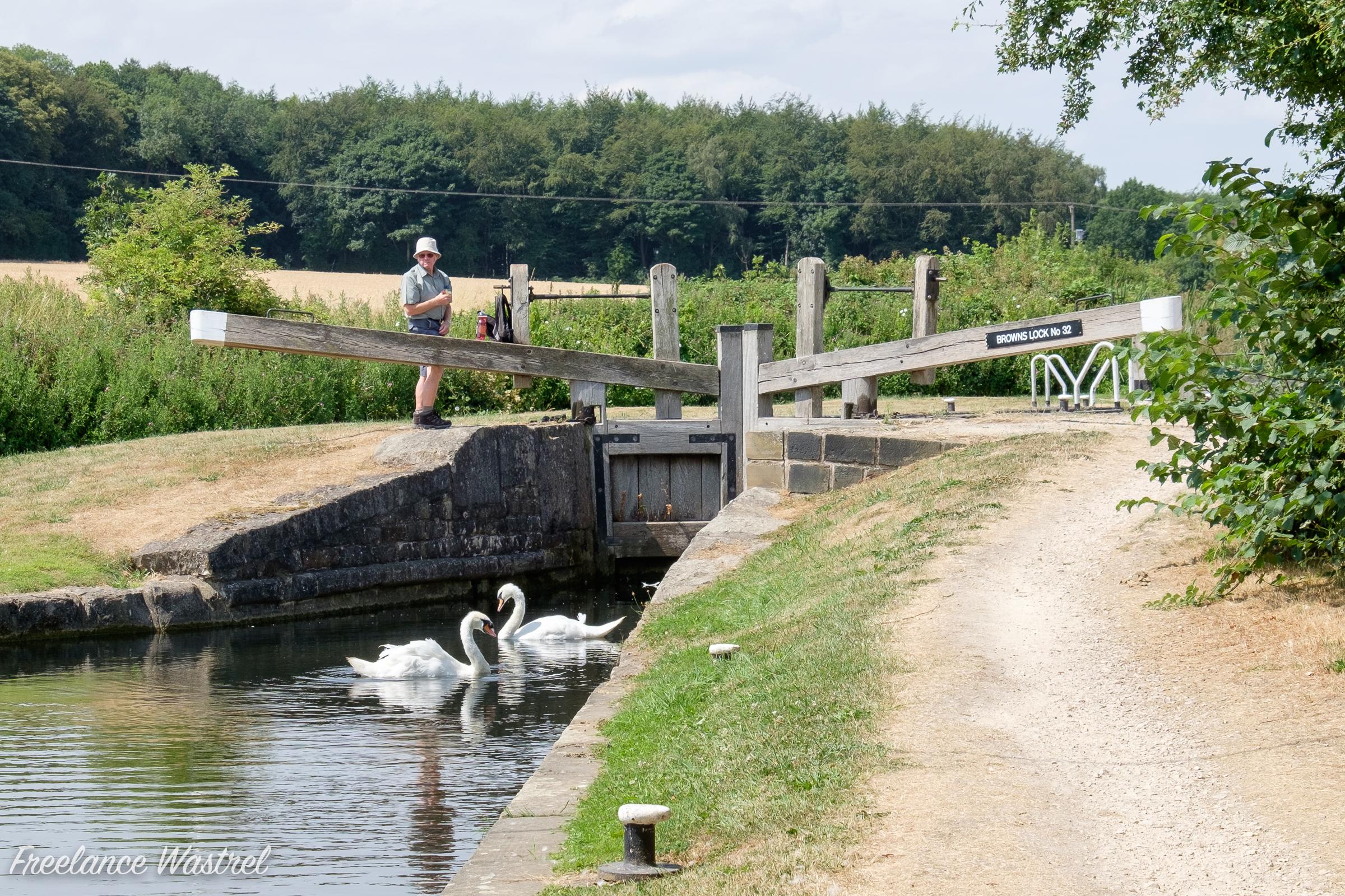 Swans at Browns Lock No.32