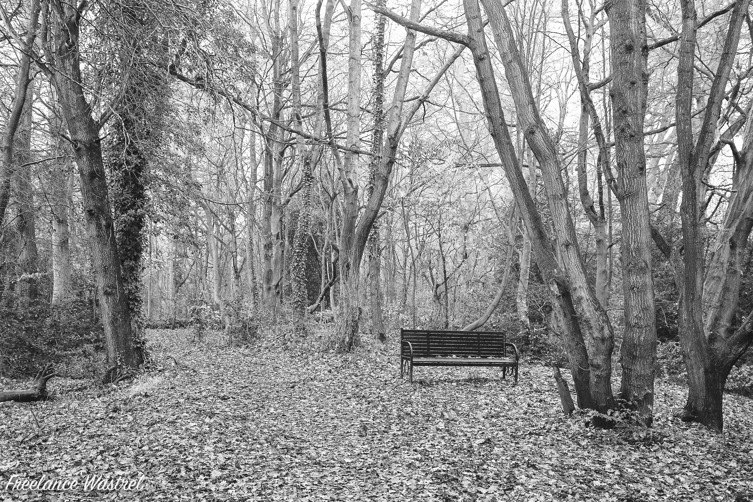 Bench in the wood, December 2018