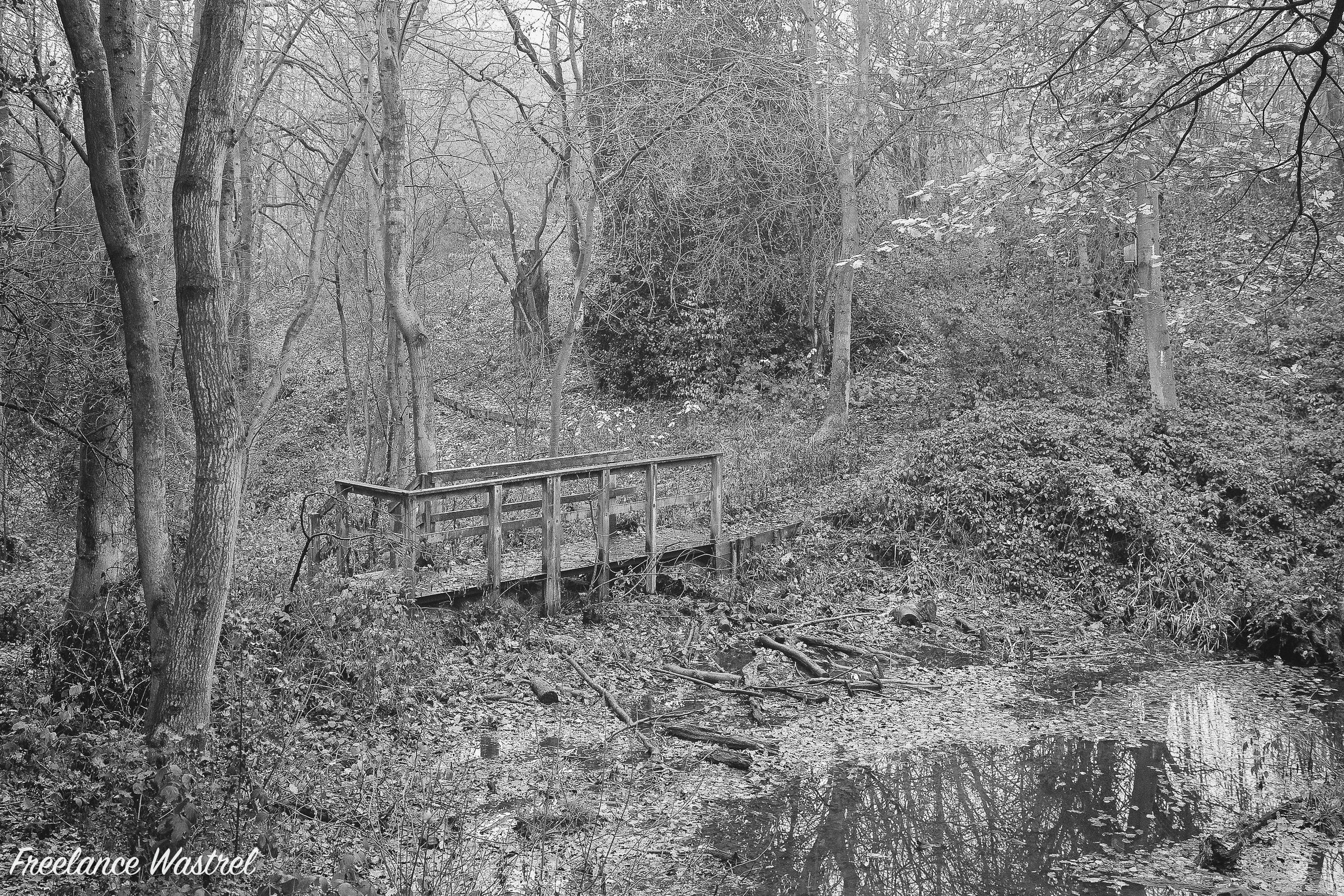 Boardwalk, Carr Wood, December 2018