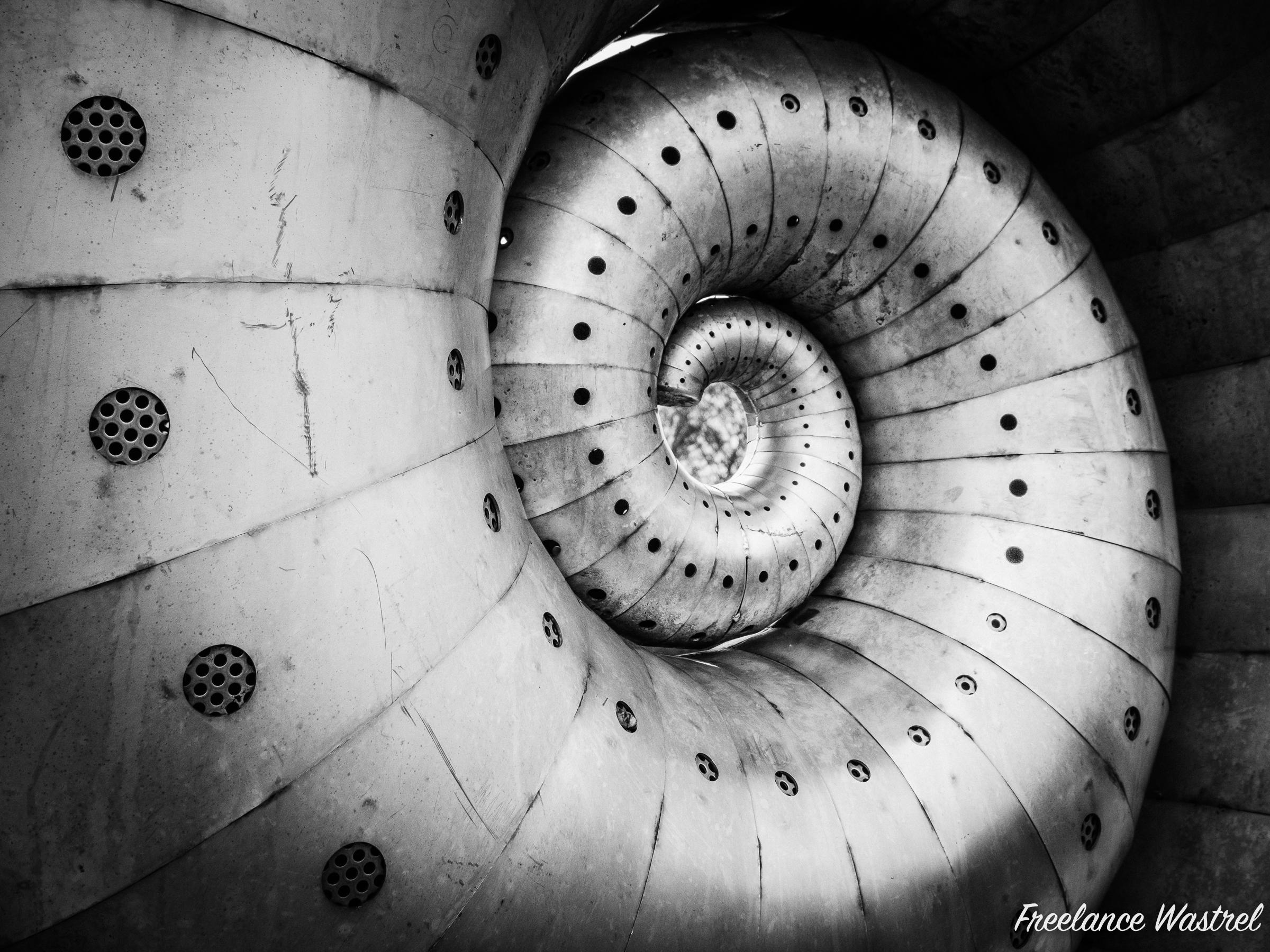 Mollusc by Liz Lemon