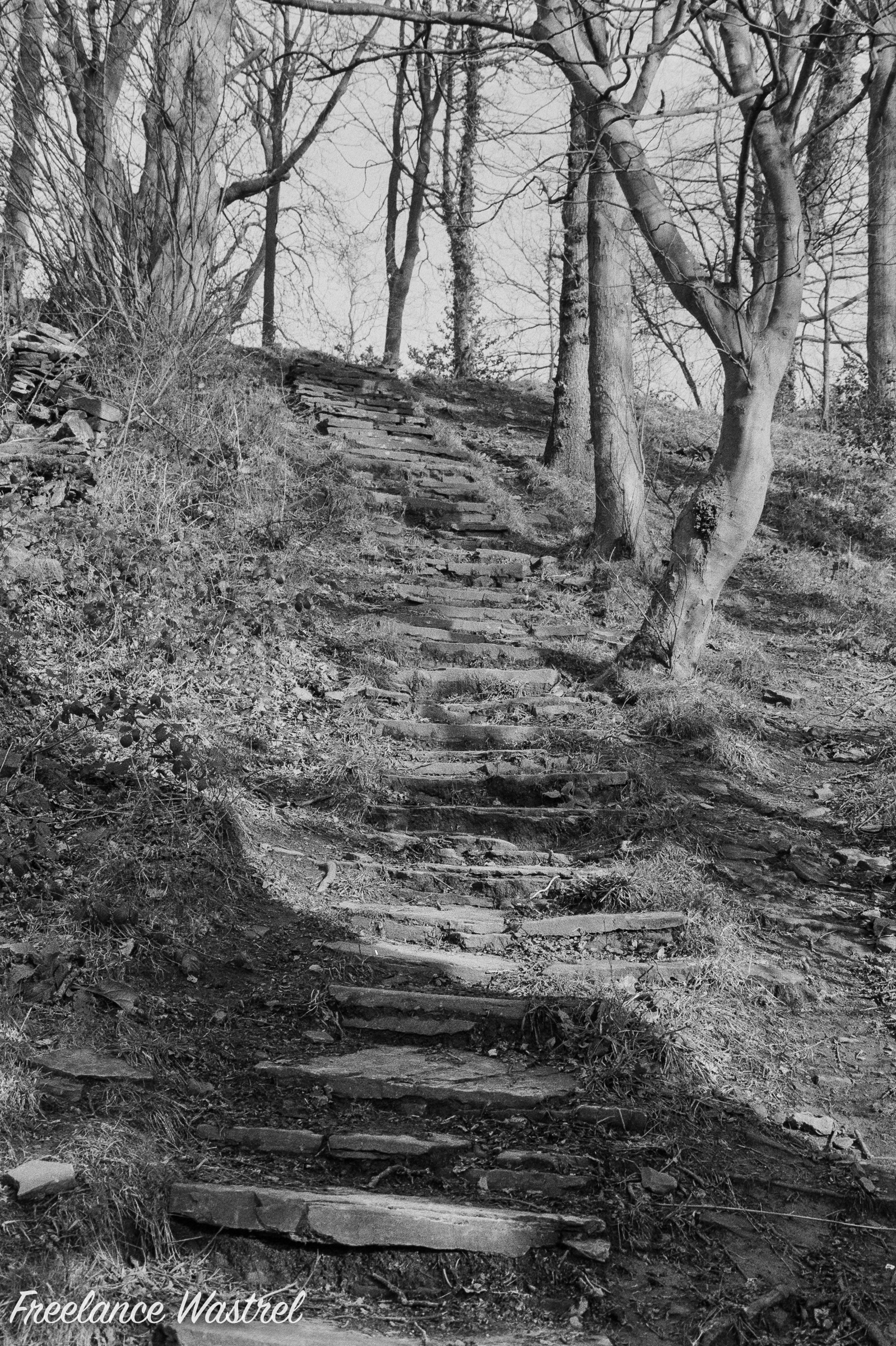 Woodland Staircase, February 2020