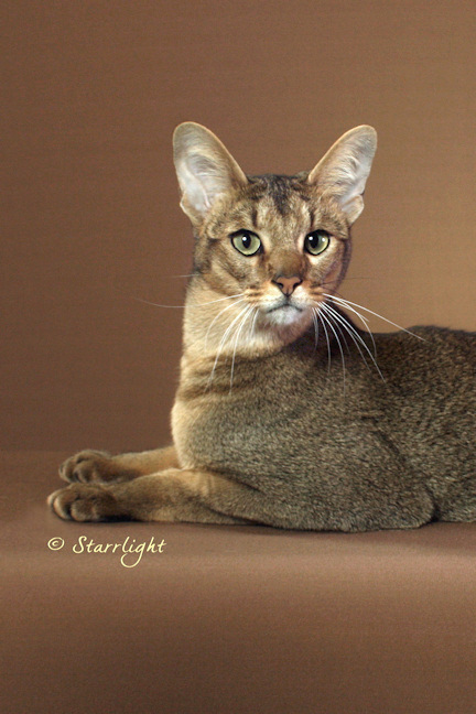 Tor - Chausie