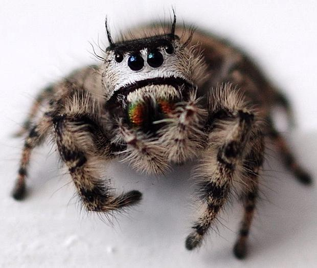 Cute Cute Babies Hd Wallpapers Who Knew Cute Spiders Exist