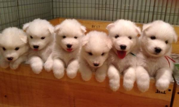 Image result for box of puppies