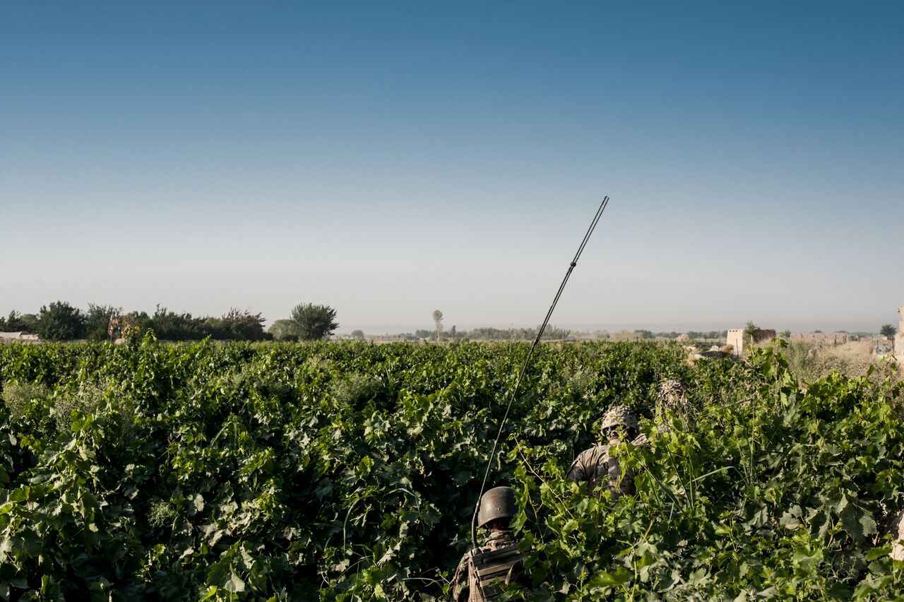 Afghan and American troops walk through grape plants in Kandahar's restive Zhari District in the stifling heat. Photo by Ben Brody/The GroundTruth Project