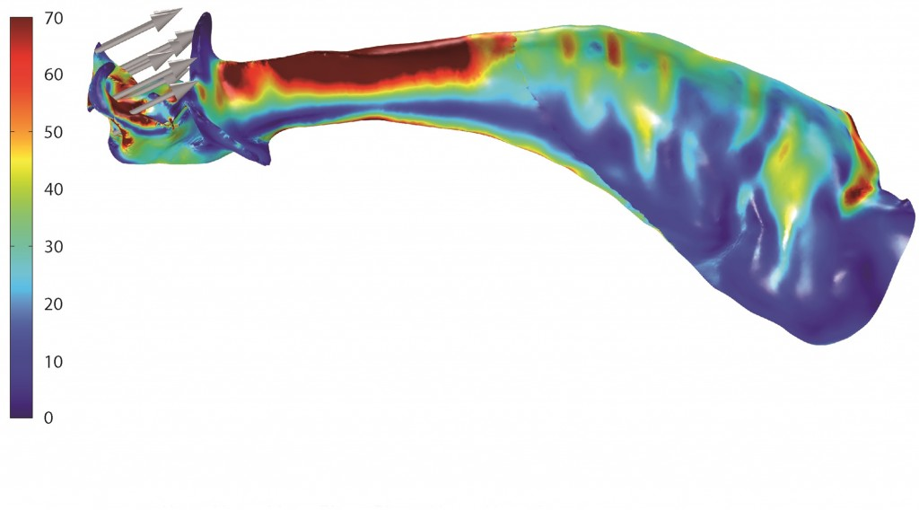 3-D model of where strain might occur in with the copulatory organ of male Tasmanian cave spiders. The big grey arrows indicate the directions that the stress load might be applied during sex, while the colors red, yellow and blue indicate areas where high, medium and low levels of strain might be felt. Photo by Lipke E, Hammel JU, Michalik P. Biol. Lett. 2015 (modified).