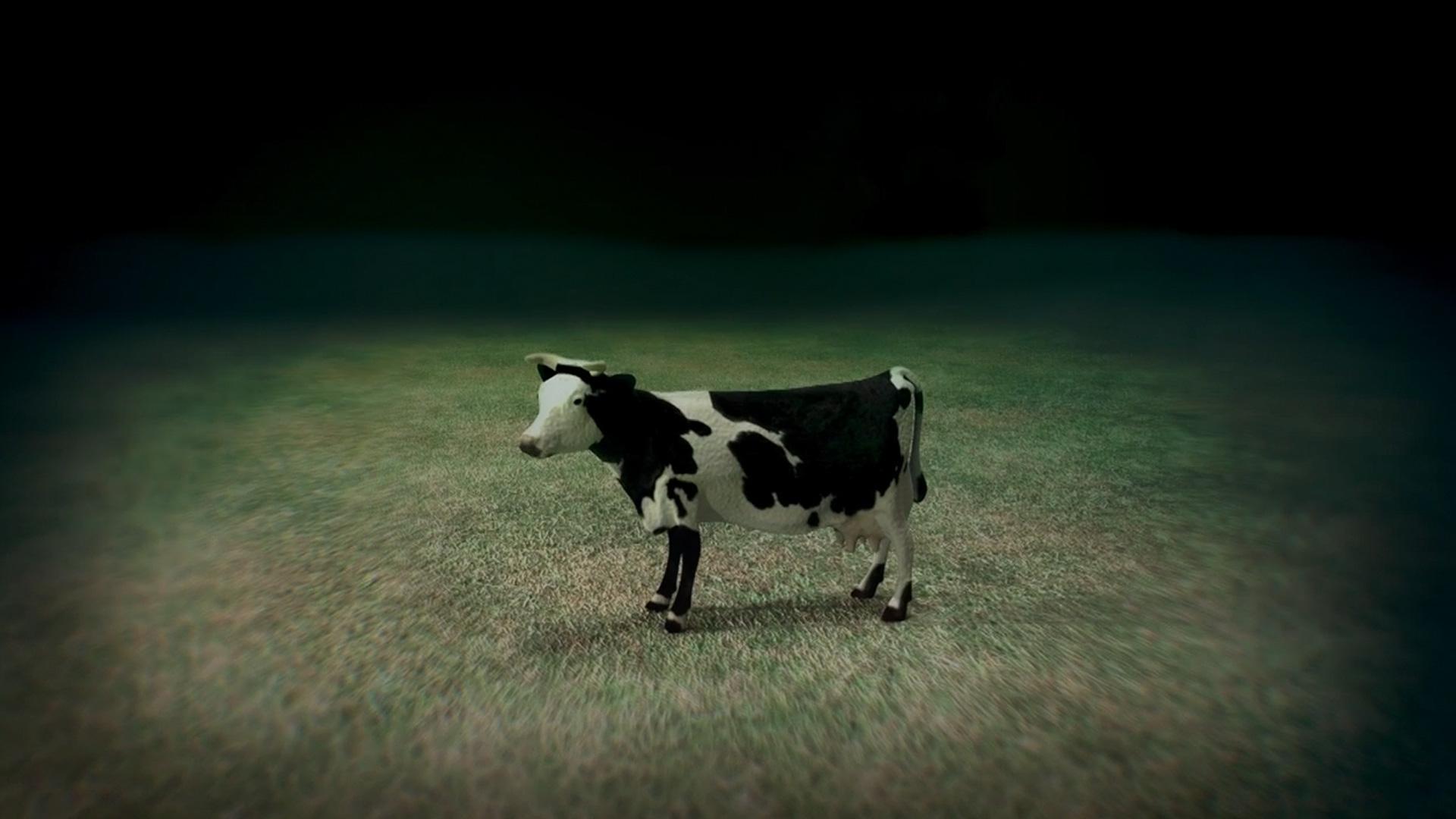 NOVA  Official Website  Flying Cow Intestines