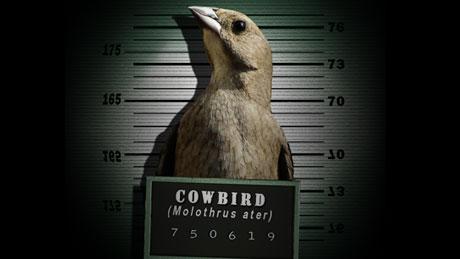 NOVA  Official Website  Gangster Birds