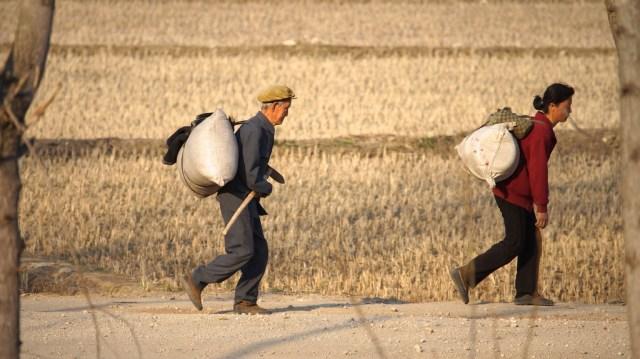 朝鲜农民运送物资