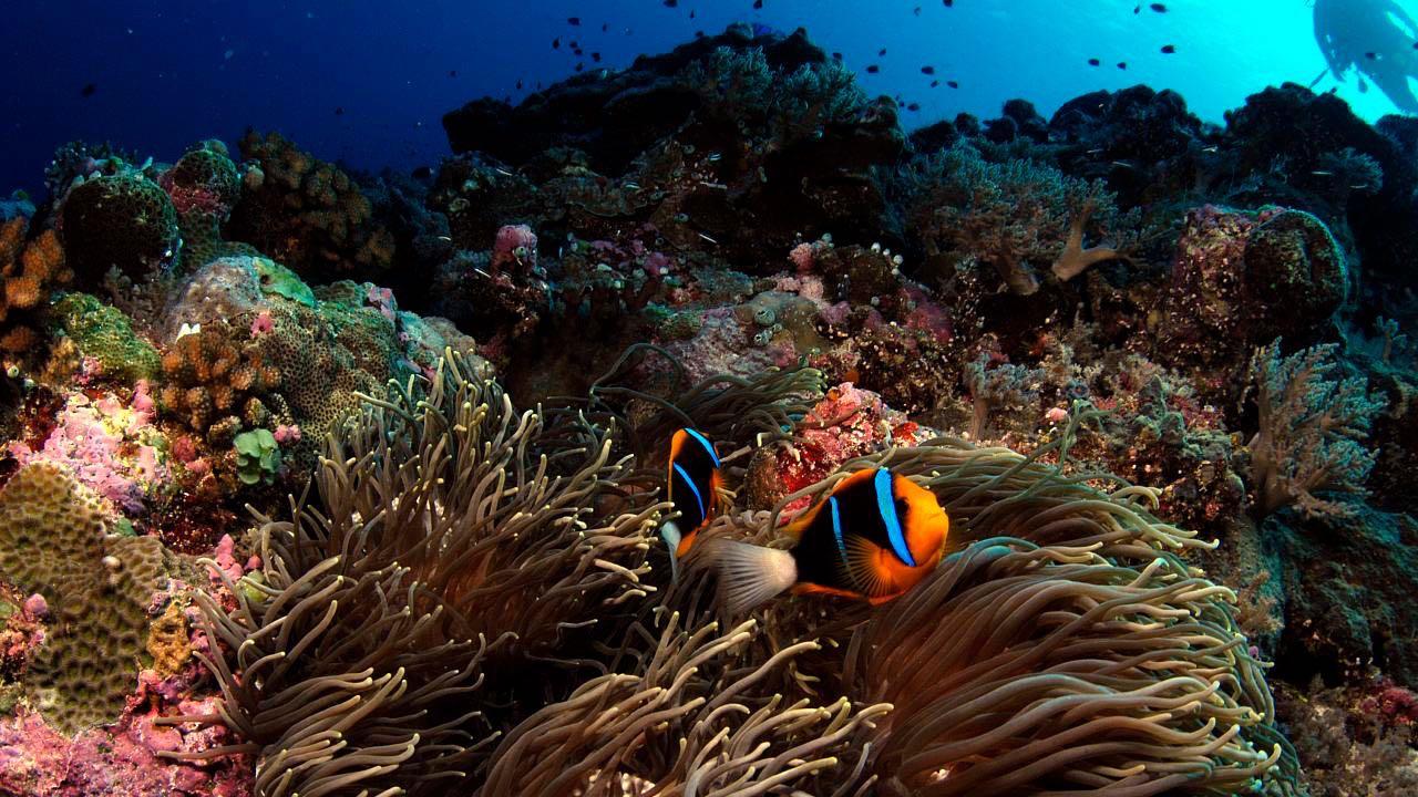 palau-reef