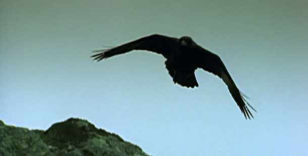 ravens discover the brainpower