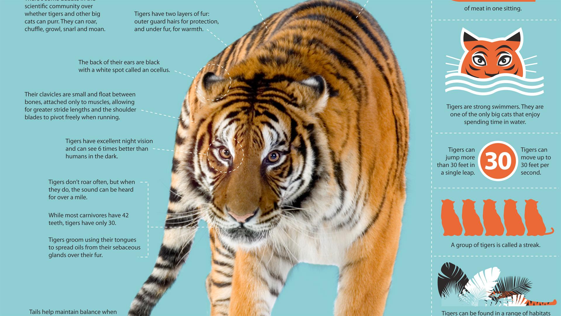 Siberian Tiger Quest