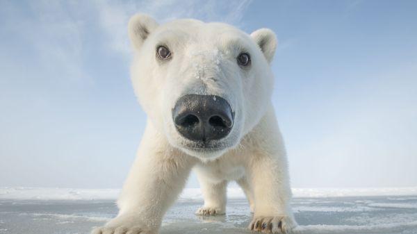 Snowbound Winter of Animals