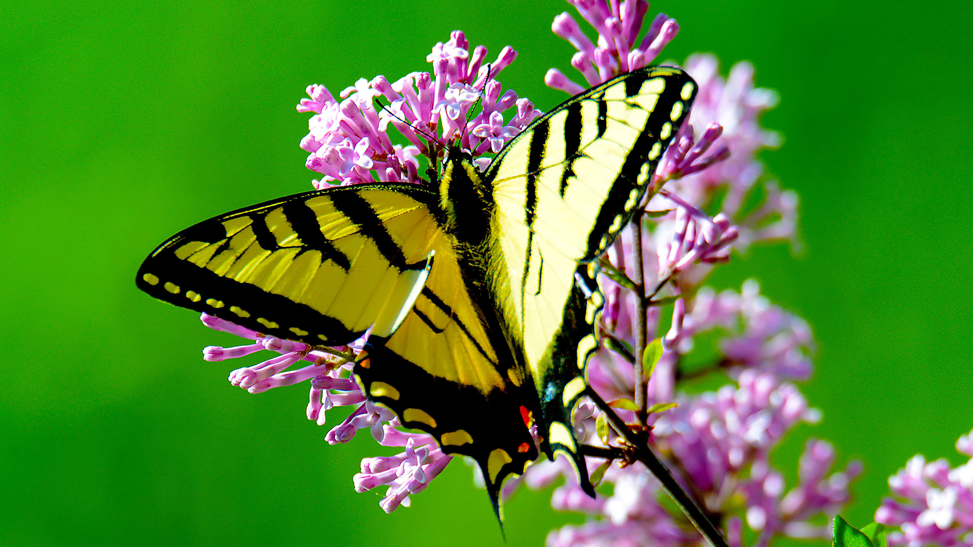 How To Garden For Butterfly Life Cycles Blog Nature Pbs