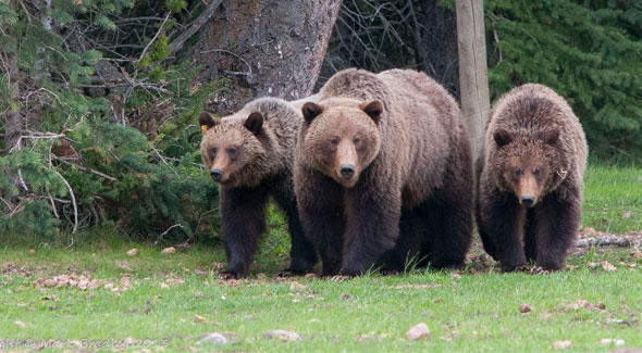 Animals Jasper National Park