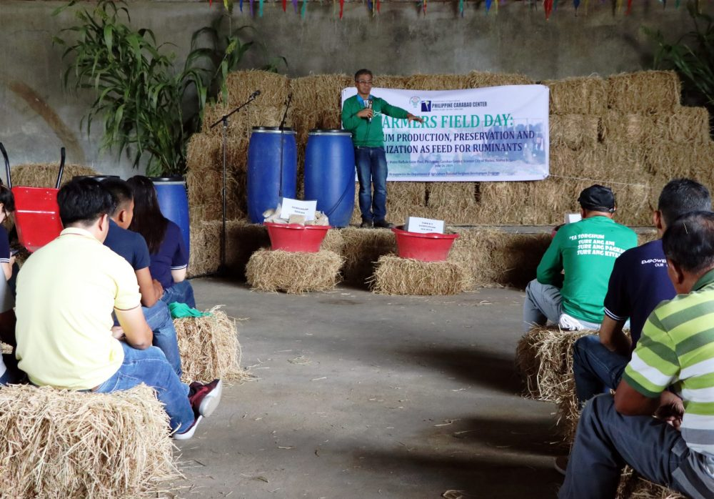 medium resolution of more than 150 farmers and ruminant raisers in luzon gained technical know how on sweet sorghum production management and practices for sustainable supply of