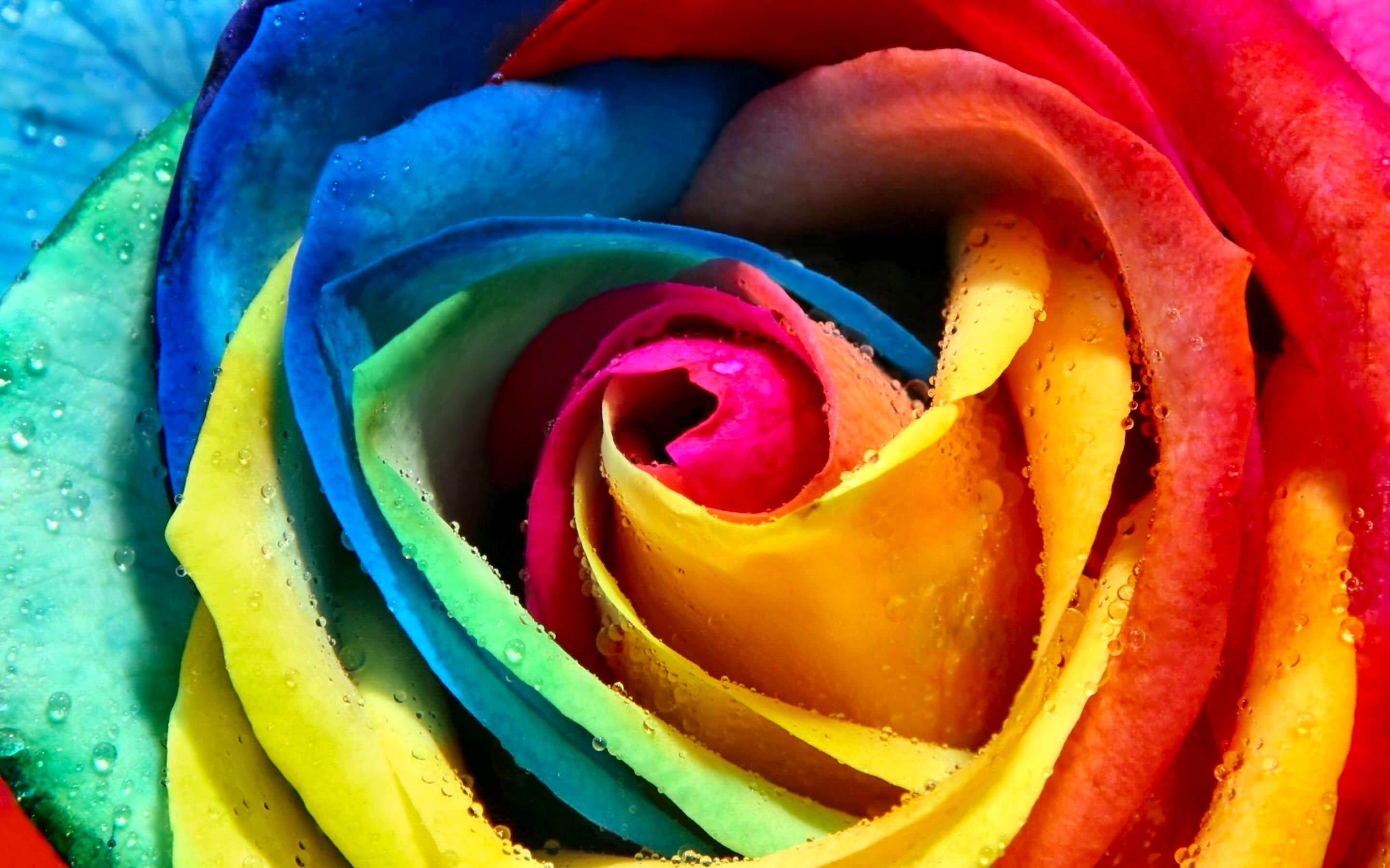 colorful hd wallpapers and
