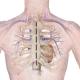 congenital heart disease common questions
