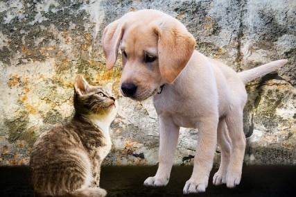 Preparedness for your pet