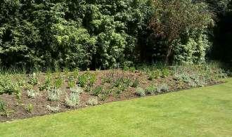 New planting in Oxshott