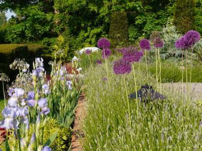 Herbaceous planting in Surrey