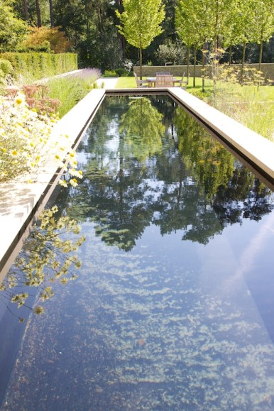 Reflections in pool