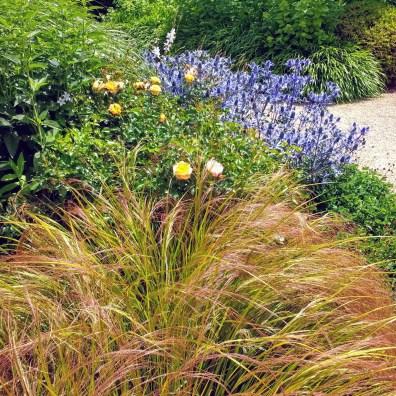 Anemanthele lessoniana, Sanguisorba officinalis 'Tanna', Rosa 'Flower Carpet Amber' . Exbury Centenary garden