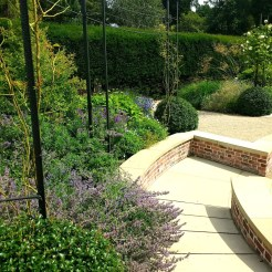 Clipped Osmanthus burkwoodii, Nepeta racemosa 'Walkers Low', and roses. Exbury Centenary Garden.