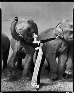10 - Avedon - Dovima-with-elephants
