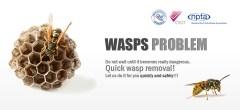 Wasps Problem