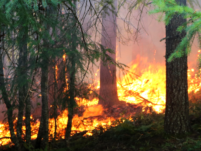 forest wildfire, by usfs