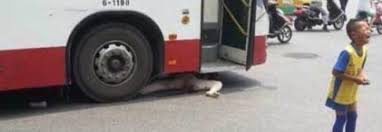 cina,vecchietta sotto il bus