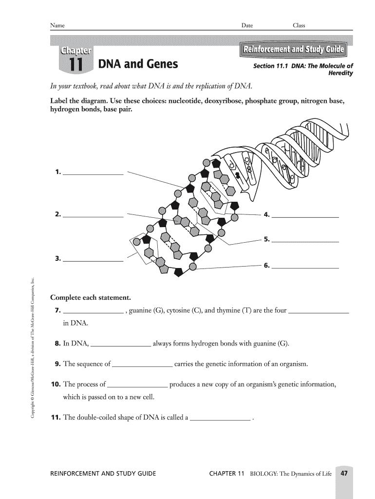 Biology Chapter 10 Study Guide Answers : Biology Study