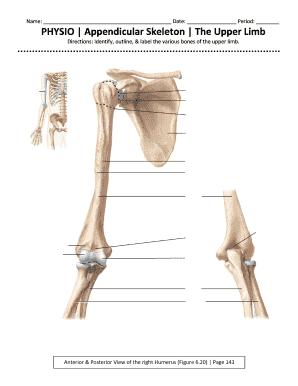 Fillable Online Montville Appendicular Skeleton The Upper