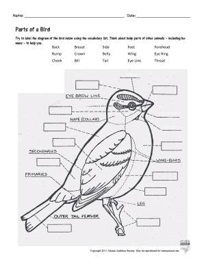 Fillable Online Parts of a Bird worksheet and key Fax