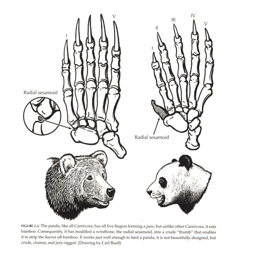 Pandas vs Grizzlies: Comparing Two Fascinating Species of