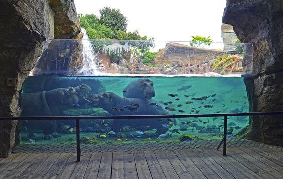 giornata allo zoo - cose da fare in estate