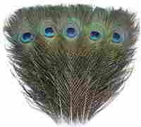 TinaWood 10PCS Real Natural Peacock Eye Feathers 9.8-11.8 inch