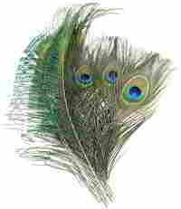 Coceca 40pcs Peacock Feathers 10-12 Inches and 20pcs Peacocks Sword 12-15 Inches