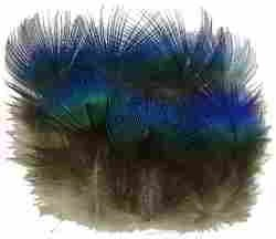 Sowder 50pcs Blue Peacock Plumage Feathers 1-3 Inches Home Wedding Decoration